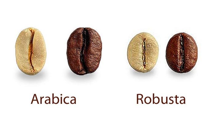 sự khác nhau giữa hạt cà phê Arabica và Robusta