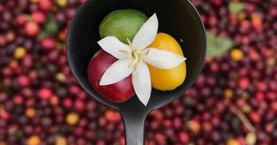 Các loại hạt cà phê phổ biến chính