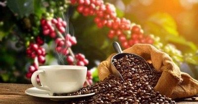 Giá cà phê hôm nay 29/11: Giữ mức trên 33.000 đồng/kg ở Tây Nguyên